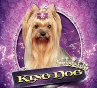 Салон красоты для животных King Dog