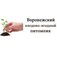 Воронежский плодово-ягодный питомник