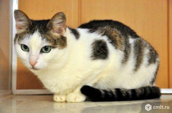 Кошечка Надя с необыкновенными глазами. Фото 4.