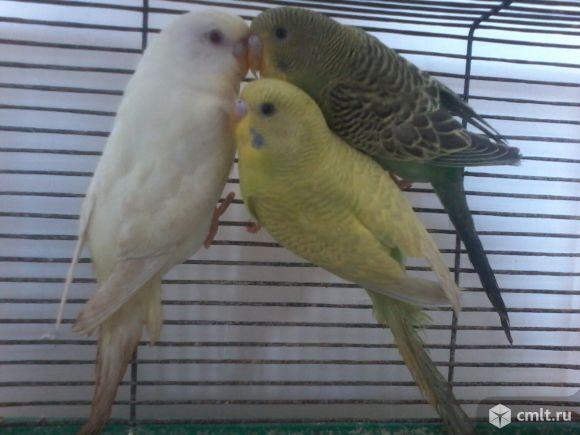 Попугаи. Фото 1.
