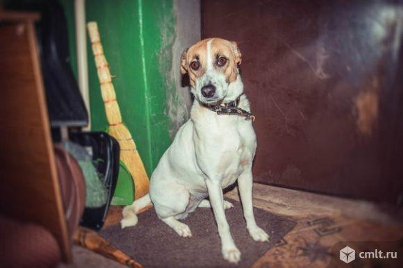 Веселая собачка Линда. Фото 1.