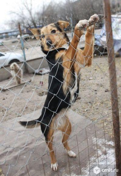 Не большая игривая собачка хочет стать домашней. Фото 1.