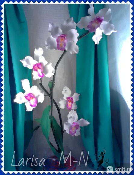 Любителям комнатных растений!. Фото 1.