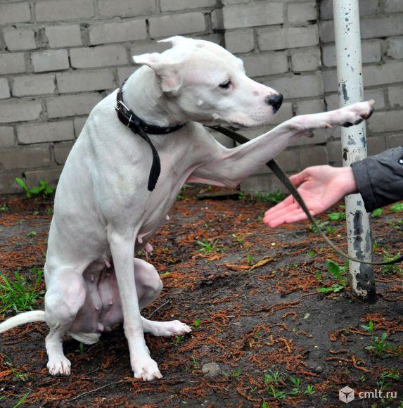 Собака в дар в добрые руки