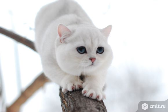 Даром отдам кота.. Фото 1.