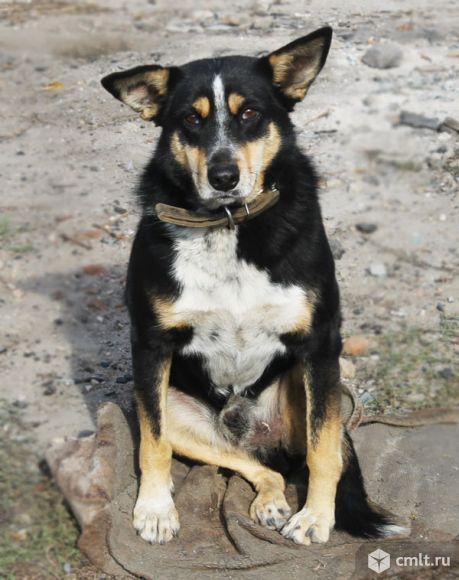Уникальный пес Матрос