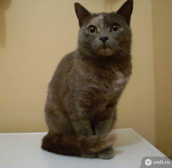 Красивая, молоденькая кошечка Ксюша в ваш дом!