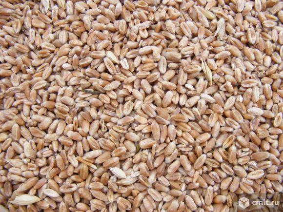 Пшеница в мешках. Фото 1.