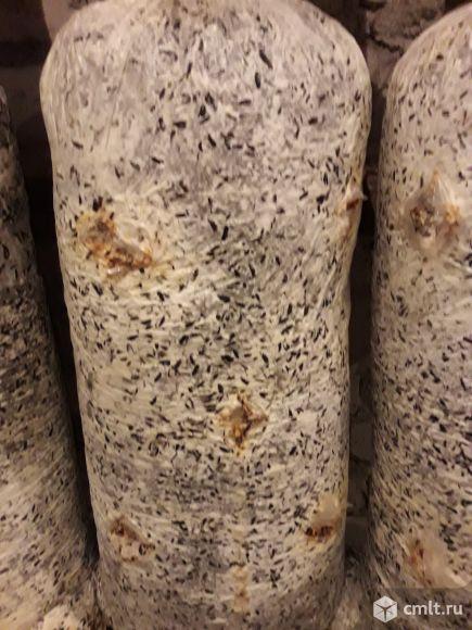 Отработанные грибные блоки на удобрение