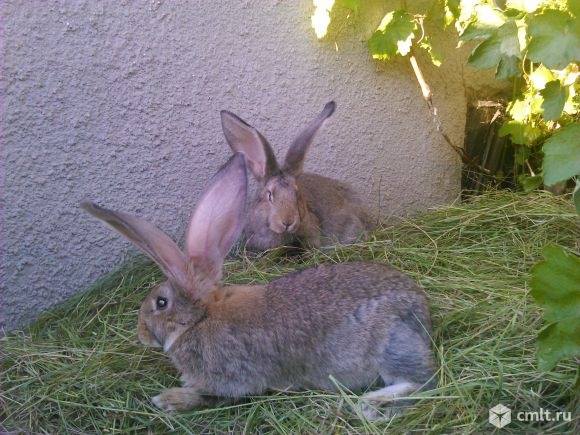 Кролики разных пород. Фото 5.