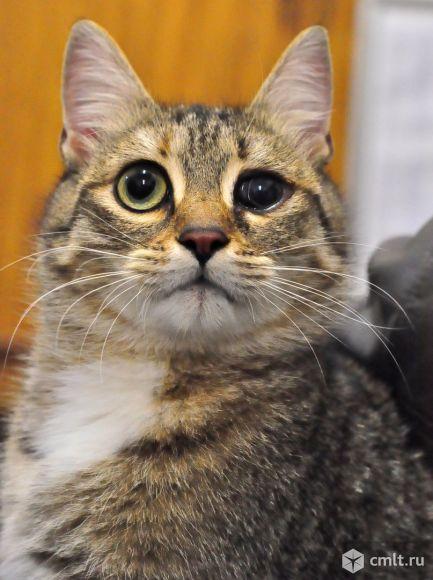 Кошка Дуся станет вашей любимицей. Фото 1.