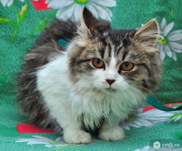 Кошечка Келли!!!. Фото 1.