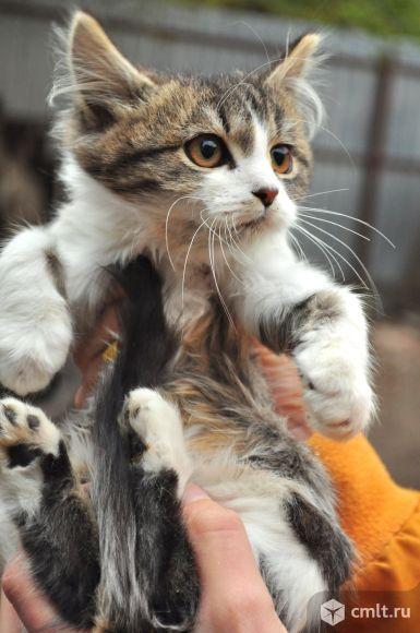 Кошечка Келли!!!. Фото 3.
