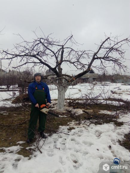 профессиональная обрезка деревьев