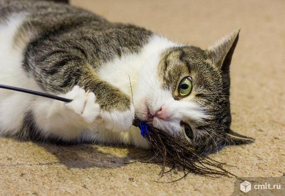 Настёна - кошка для души.