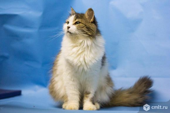 Четырнадцатый год жизни кошки Симы