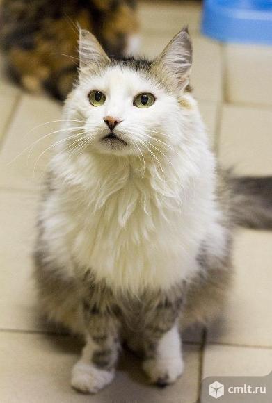 Самостоятельная кошка Мася. Фото 1.