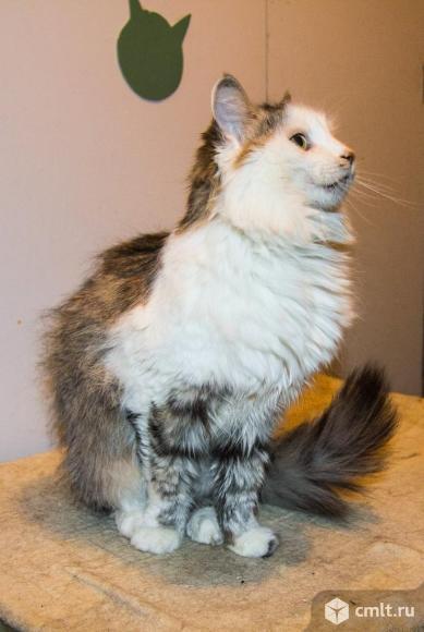 Самостоятельная кошка Мася