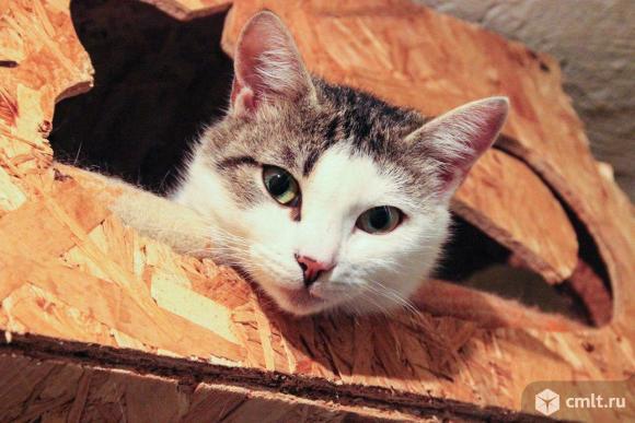 Кошка Мурка ждет хозяина. Фото 1.