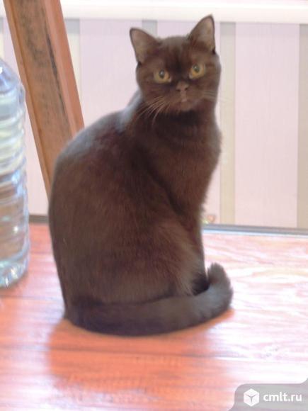 Очаровательные котята. Фото 5.