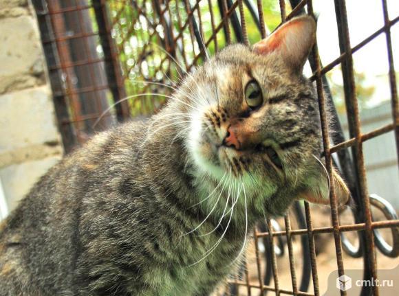 Кошка Плюшка ищет дом!