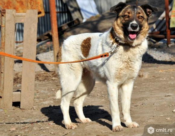 Ищем хозяина приютской собаке Белке.