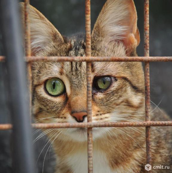Кошка Дуся станет вашей любимицей. Фото 2.