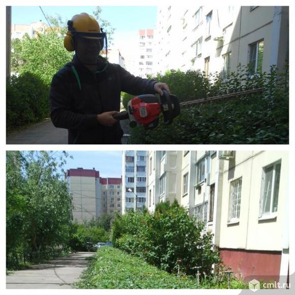 Обрезка живой изгороди, стрижка кустарника в Воронеже. Фото 6.