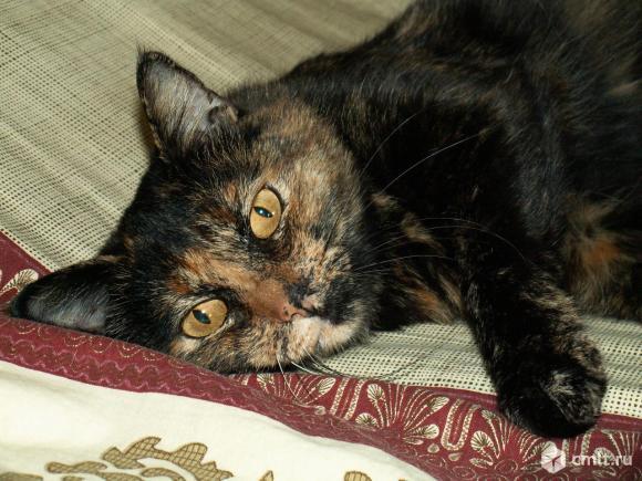 Позитивная кошка-пеструшка Юта