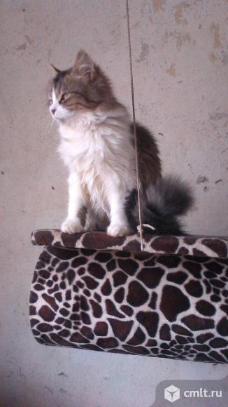Кошечка Келли ищет дом.