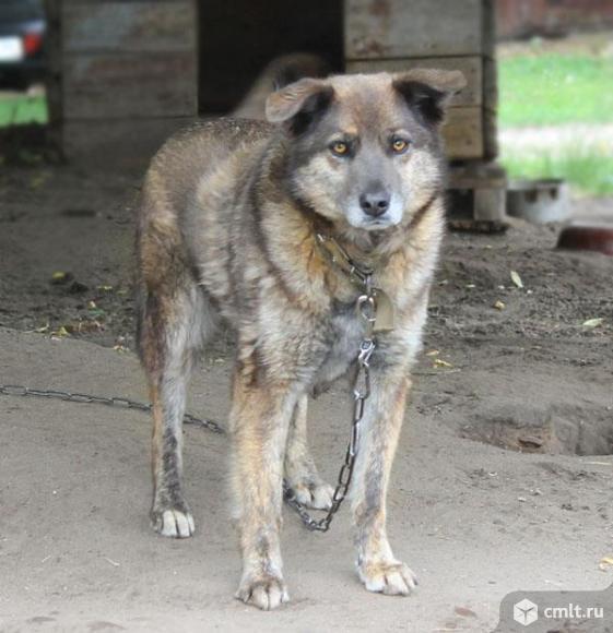 Волчонок Дина