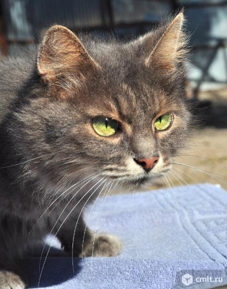 Мечтаем найти дом шикарной кошке!. Фото 2.