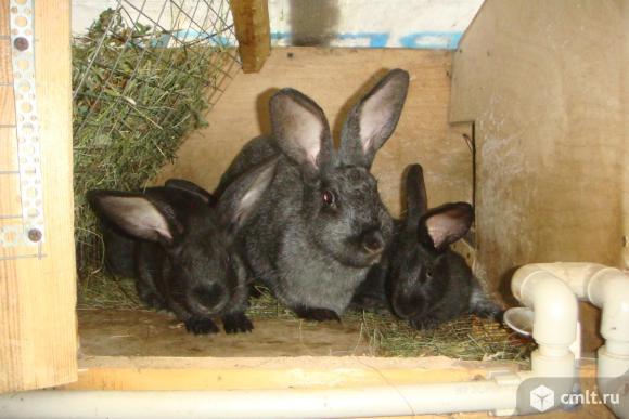 Кролики разных пород. Фото 1.