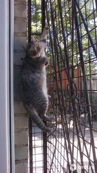 Воронеж! Кошечка Маруся в приюте.