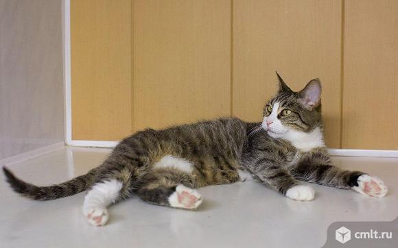 Кошечка ждет хозяина в приюте!