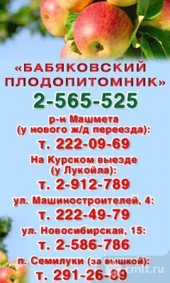 Заказать проститутку в Тюмени ул Плодопитомник проститутки ковдор