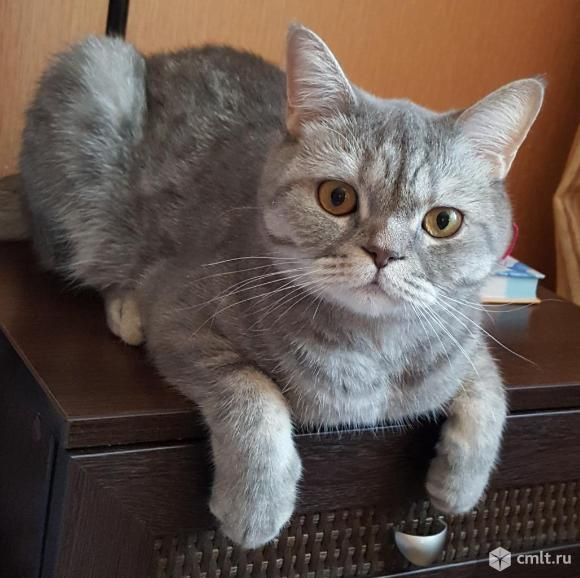 Пропал кот!!!. Фото 1.