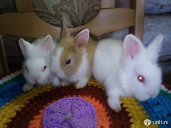 Декоративные карликовые кролики с доставкой
