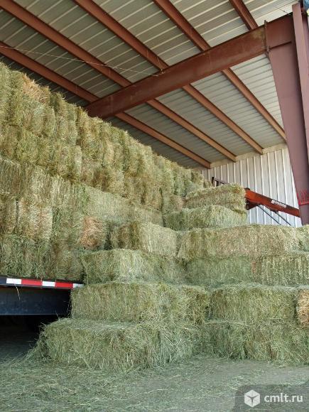 Люцерна, сено луговое, измельченное сено. Фото 1.