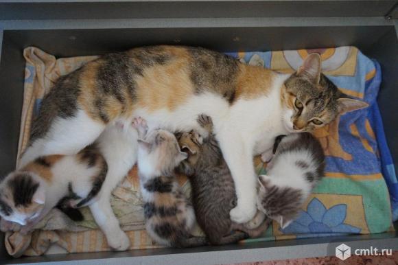 Ищем дом котятам