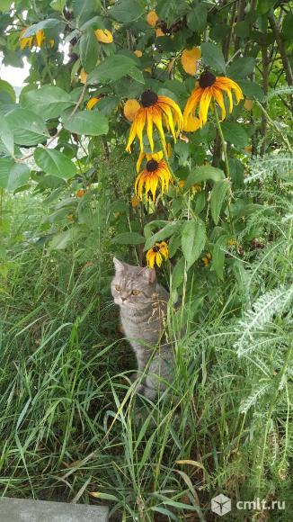 Пропал кот!!!. Фото 4.