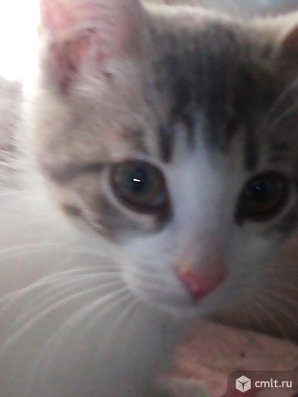 Кошечка в хорошие руки. Фото 1.