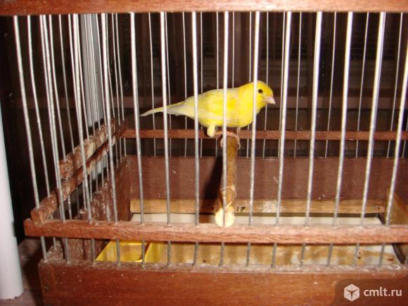 Продажа птиц. Фото 1.