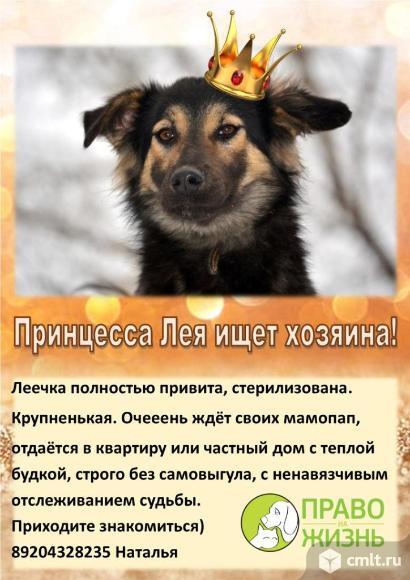 Собака в дар. Фото 1.
