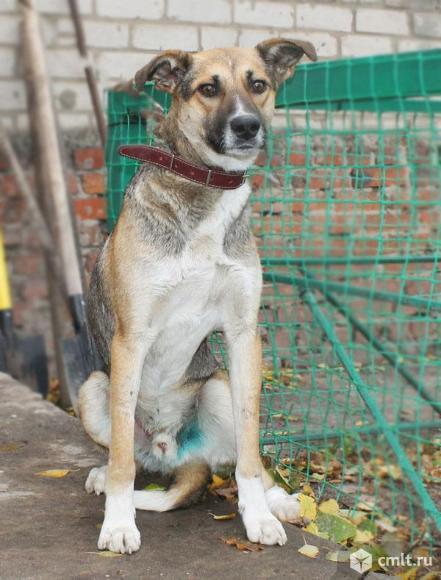 Брутальный пес Степан