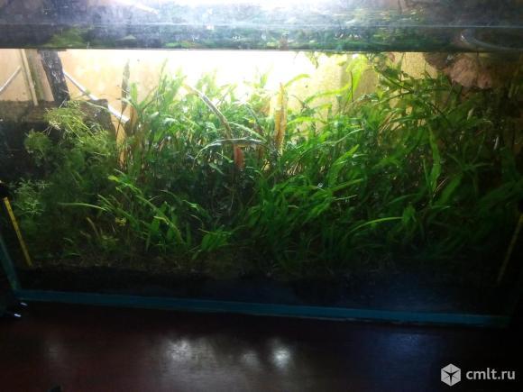 Аквариум с растениями. Фото 1.