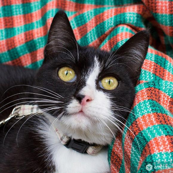 Морис- кот-джентельмен классического окраса!. Фото 1.