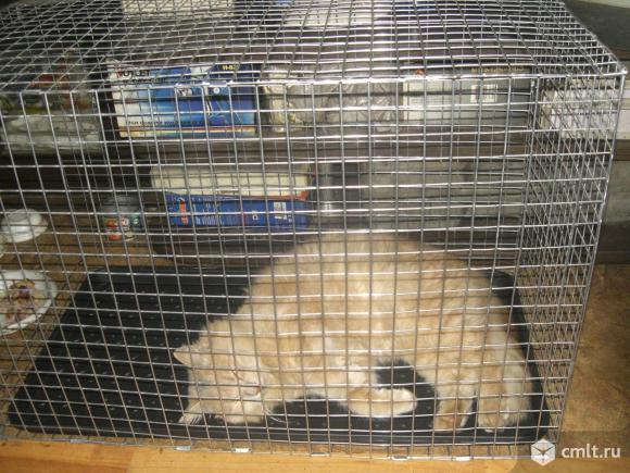 Клетка-переноска для собак и кошек. Фото 1.
