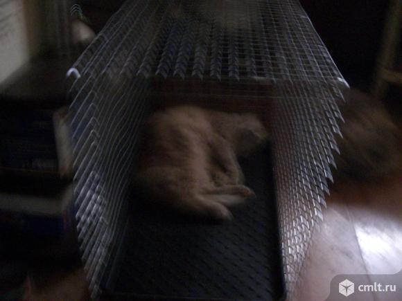 Клетка-переноска для собак и кошек