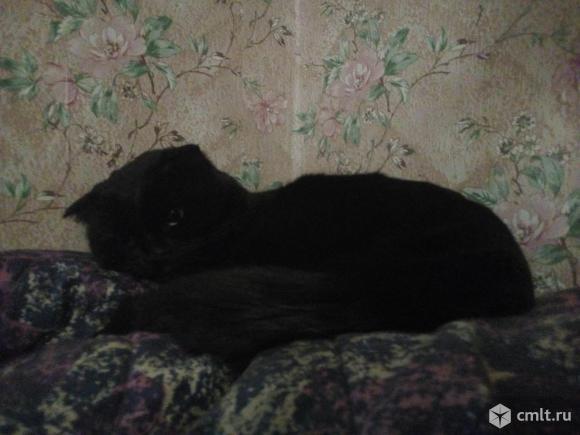Найден кот. Фото 1.